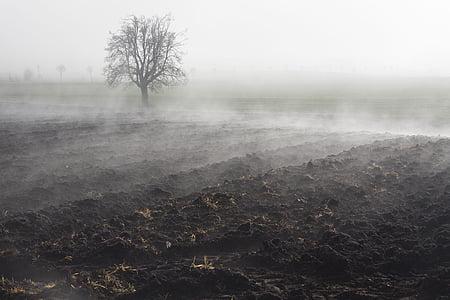 landscape of open field