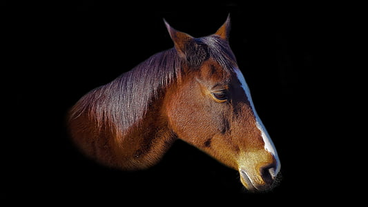photo of brown horse headbust