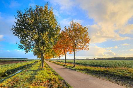 empty concrete road surrounded buy trees