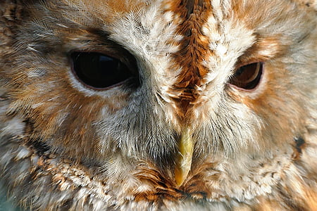 close-up photography of brown owl