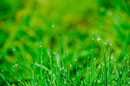 selective focus photo of green grasses with dew drops at daytime