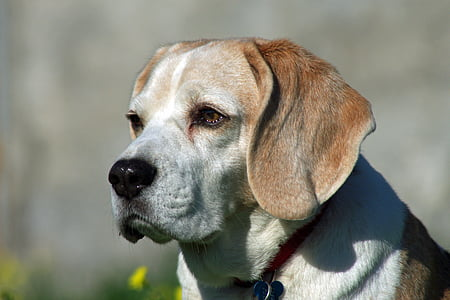 close-up photo of white and brown dog