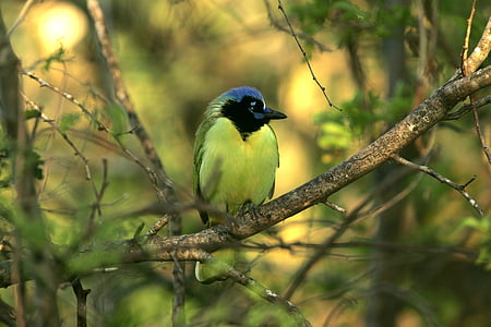bird on tree branch during daytime
