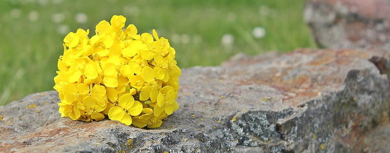 yellow petaled flowers on gray and brown concrete surface
