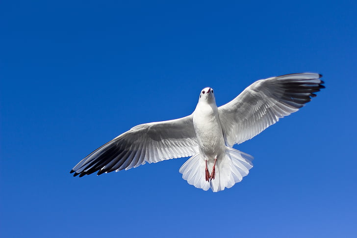 white dove flying under blue sky