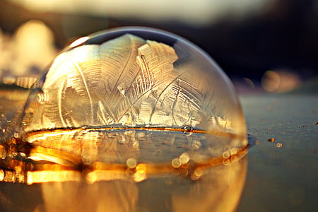 macro photography of brown bubble