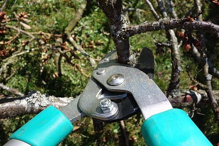 brown branch between green garden shears' blades closeup photo