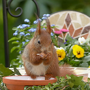 brown squirrel sitting on brown plant pot during daytime