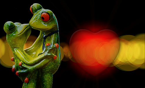 bokeh photography of couple red-eyed frog