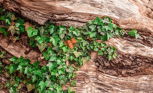green leaves on brown wooden bark