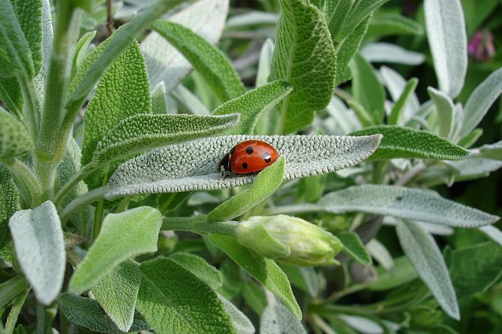 ladybug on green leafed