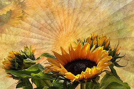 close-up photo of sunflower flowers