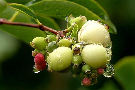 tilt-shift lens photo of green fruit