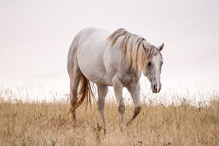 wildlife photography of white horse