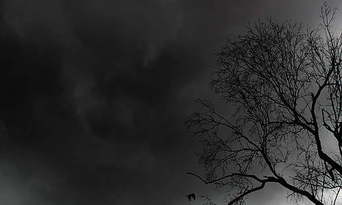 bare tree under black sky
