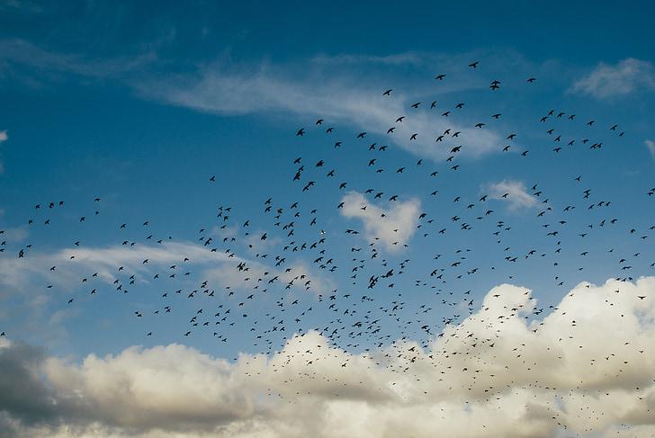 flock of birds flying up in the sky
