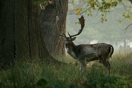 deer on forest near tree