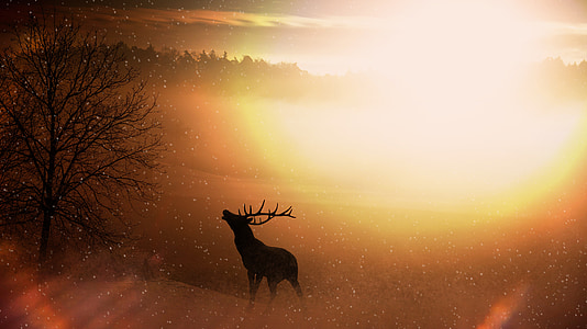 silhouette of deer with yellow sunlight