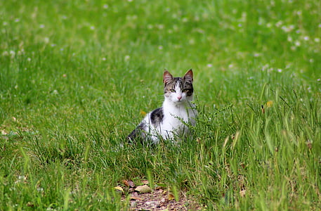 black and white tab by cat on green grass field during daytime