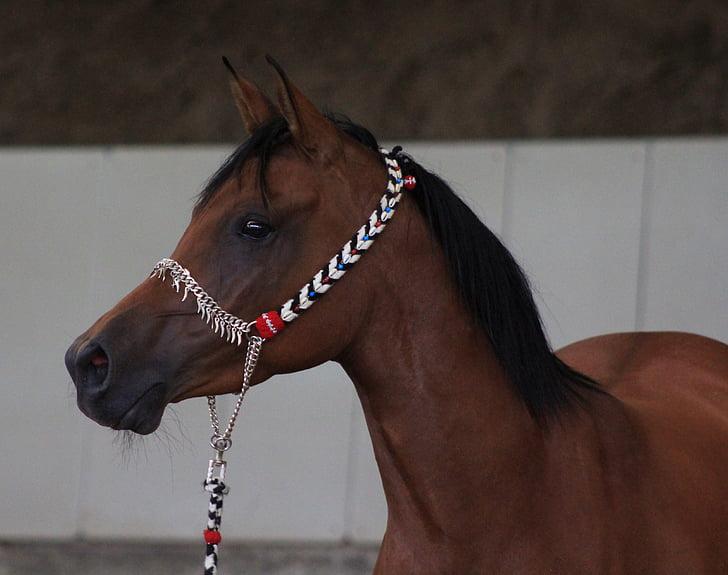 portrait photo of brown horse