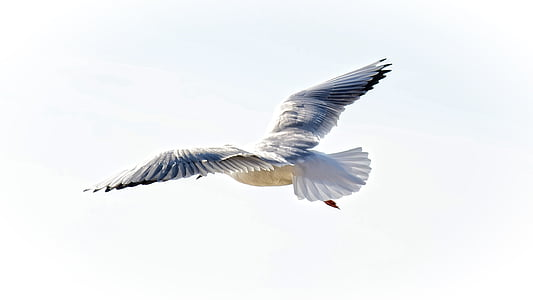 gray and white bird flying under white sky