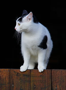 white and black cat on brown wood