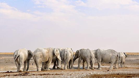 gray elephants in desert at daytime