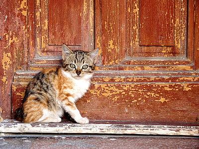 kitten beside door at daytime