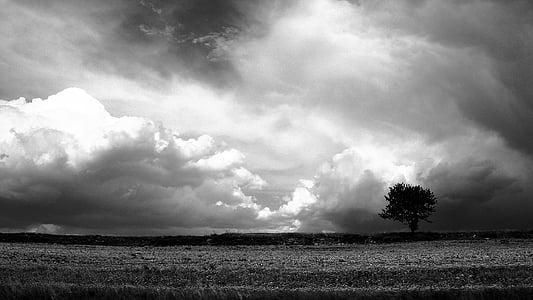 greyscale photo of tree