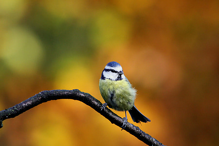 yellow and blue bird perched on brown branch at daytime