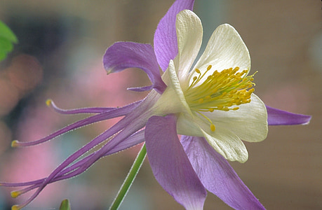 macro shot photography of white and purple petaled flower