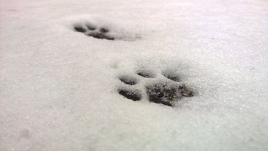 paw marks on snow coated ground