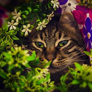 brown cat hiding on bush