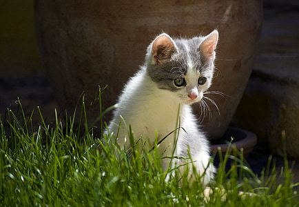 photography of cat on weeds