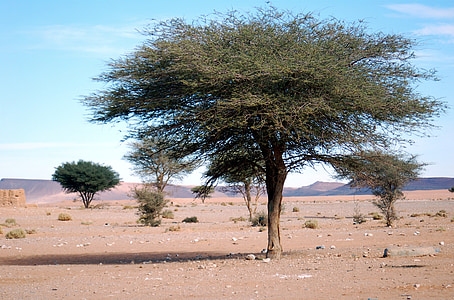 field of trees on desert