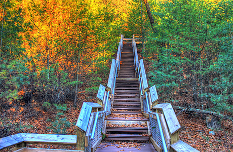brown stair surrounded by trees