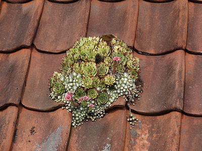 green plant on brick roof