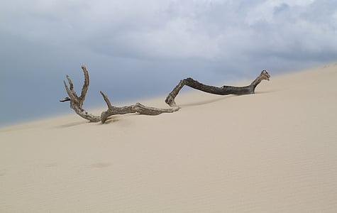 grey driftwood on white sand