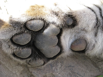 closeup photo of animal paw