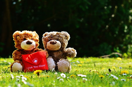 two brown bear plush toys on green grass