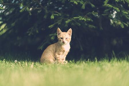 orange tabby kitten sitting on grass during daytime