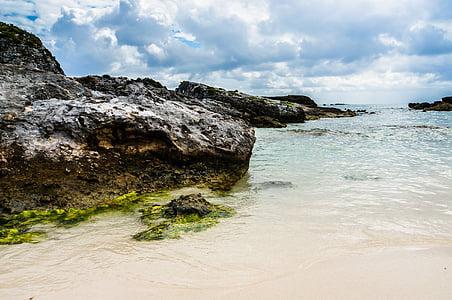 brown stone near sea shore
