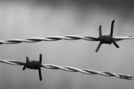 grayscale photo of barbed wires