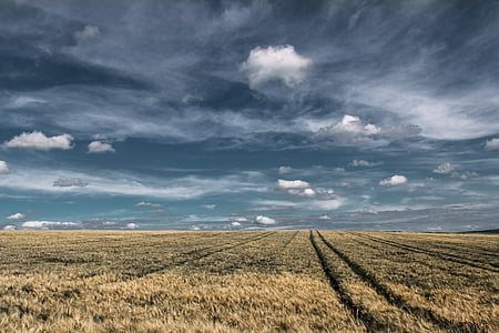 landscape photography of hay field