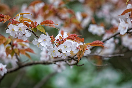 selective focus photography of white petaled flowers at daytime