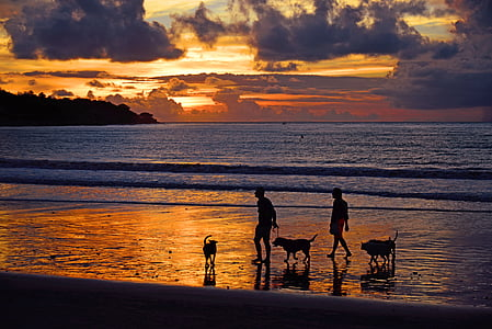 silhouette of two man and three dog walking on seashore during sunset