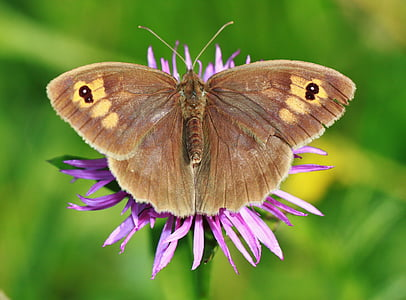 brown butterfly on purple petaled flower photography