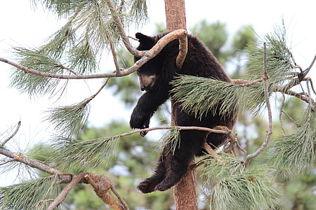 grizzly bear on tree branch during daytime