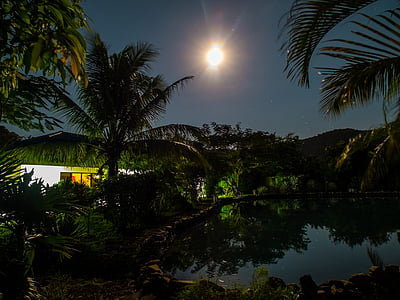 pond with trees at night with moon