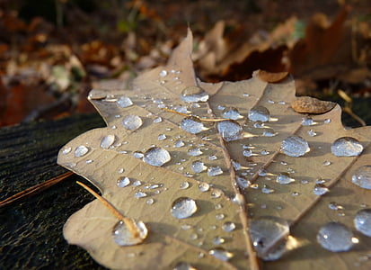 focus photography of dried leaf with droplets